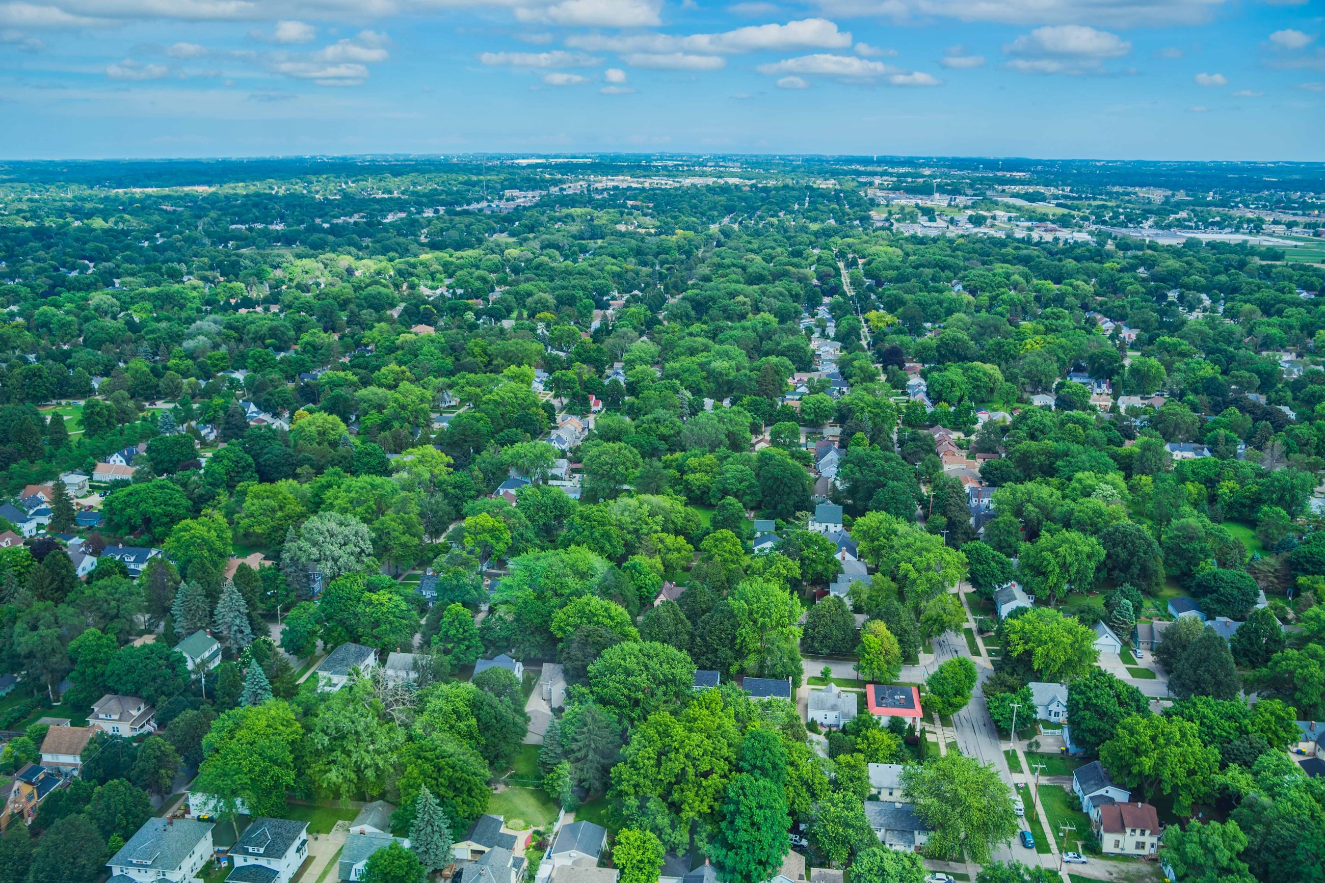 Arial View of Neighborhood Full of Trees